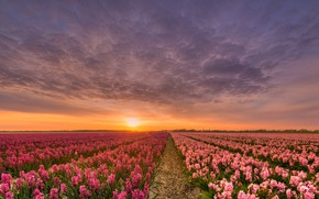 Wallpaper field, the sky, the sun, clouds, light, sunset, flowers, beauty, the evening, horizon, space, straw, ...