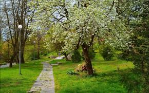 Picture Spring, Park, Park, Spring, Flowering, Flowering