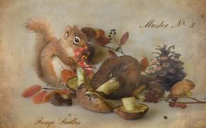 Picture berries, mushrooms, protein, still life, bump, Rowan, boletus, Botanical album