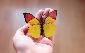 Picture background, butterfly, hand