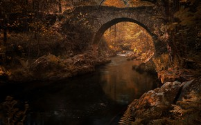 Picture autumn, leaves, water, light, trees, branches, bridge, reflection, river, stream, stones, thickets, vegetation, foliage, channel, ...