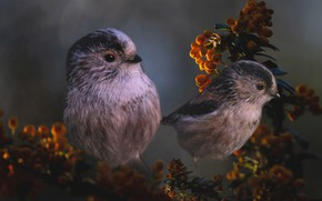 Picture flowers, birds, branches, rendering, Tits, photoart