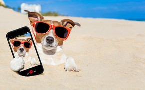 Picture sand, sea, beach, the sun, photo, photoshop, humor, glasses, bokeh, smartphone, selfie, Jack Russell Terrier