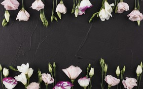 Picture flowers, black background, pink, flowers, beautiful, romantic, eustoma, eustoma