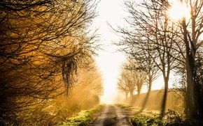 Picture road, light, fog, morning