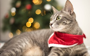 Picture cat, cat, look, face, red, lights, grey, background, holiday, portrait, New year, lies, headband, tree, …