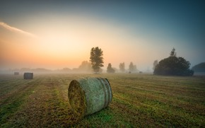 Picture field, fog, hay