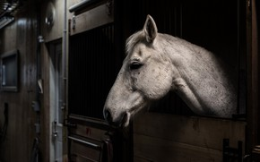Picture background, horse, stall