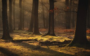 Picture autumn, forest, leaves, light, trees, branches, fog, stream, trunks, glade, driftwood