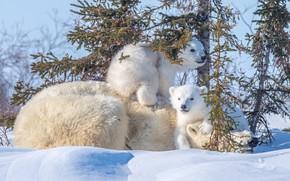 Picture snow, bear, kids, bears, mom