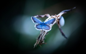 Picture macro, blue, butterfly