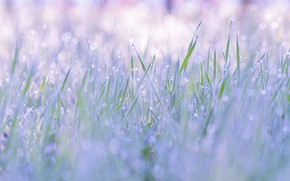 Picture grass, drops, nature, Rosa, ease, tenderness, spring, clearing, bokeh