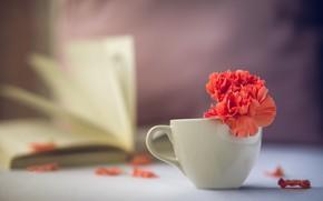 Picture flower, blur, petals, mug, Cup, book, red, carnation, bokeh