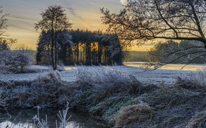 Picture frost, nature, morning