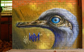 Picture bird, head, graffiti wall