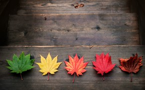Picture autumn, leaves, colorful, maple, wood, autumn, leaves, maple