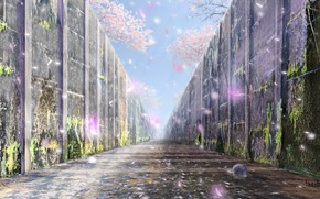 Picture road, wall, spring, Sakura