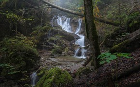 Picture forest, trees, thickets, waterfall, deadwood