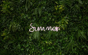 Picture summer, leaves, plants, neon, summer, neon