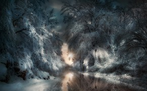 Picture winter, forest, night, nature, river