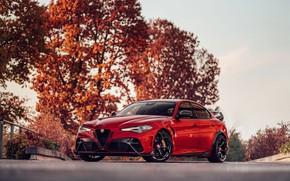 Picture trees, foliage, Alfa Romeo, Giulia, GTAm, 2020, Gran Turismo Alleggerita changed