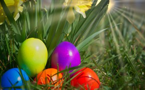 Picture nature, eggs, spring, Easter, daffodils