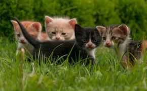 Picture grass, kittens, kids