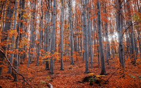 Picture autumn, forest, light, trees, branches, nature, trunks, foliage, falling leaves, Golden autumn