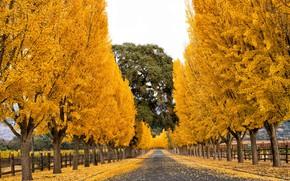 Picture autumn, nature, street