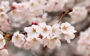 Picture nature, branch, spring, flowering