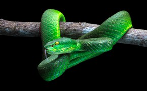 Picture green, snake, wood