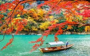 Picture autumn, leaves, trees, Park, Japan, Kyoto, nature, park, autumn, lake, leaves, tree, Arashiyama