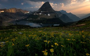 Picture flowers, mountains, yellow, top