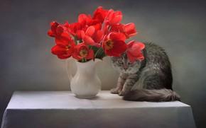 Picture cat, cat, flowers, pose, table, animal, tulips, pitcher, tablecloth, Kovaleva Svetlana, Svetlana Kovaleva