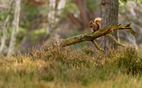 Picture forest, glade, branch, protein, snag, log, Heather