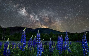 Picture landscape, flowers, mountains, night, nature, stars, meadow, USA, lupins, New Hampshire, New Hampshire