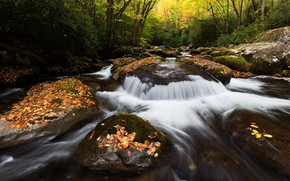 Picture autumn, forest, leaves, trees, nature, stream, stones, foliage, waterfall, stream, river, autumn, stones