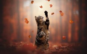 Picture autumn, cat, cat, leaves, legs, stand, cat