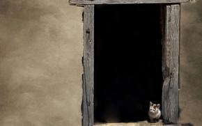 Picture kitty, wall, window, wall, kitten, window, Marketa Zvelebil