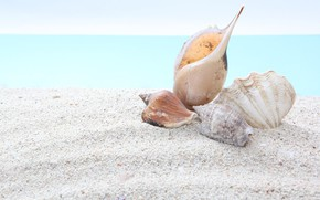 Picture sand, sea, nature, shell
