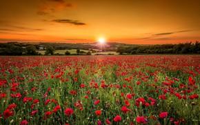 Picture field, sunrise, Maki