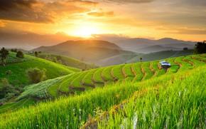 Picture mountains, field, Thailand, farm