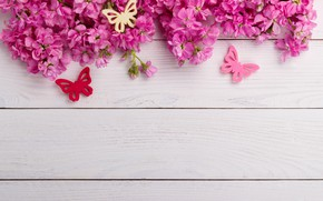 Picture butterfly, flowers, pink, wood, pink, flowers, spring, butterflies
