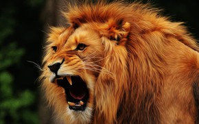Picture face, Leo, mane, fangs, pastes