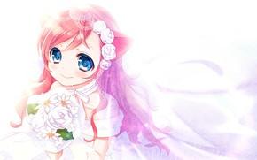 Picture Flowers, Chamomile, Girl, Kitty, The bride, Neko, sieste cat