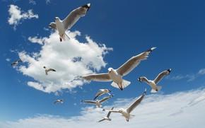 Picture the sky, the sun, clouds, birds, seagulls