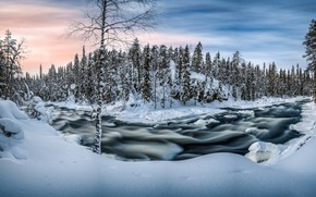 Picture winter, forest, snow, river, morning