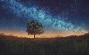 Picture the sky, night, nature, tree, the milky way