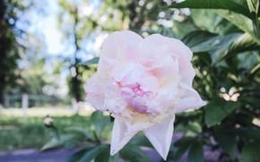 Picture summer, Macro, Flowers, rasteenie