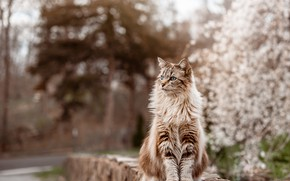 Picture cat, cat, Park, stones, garden